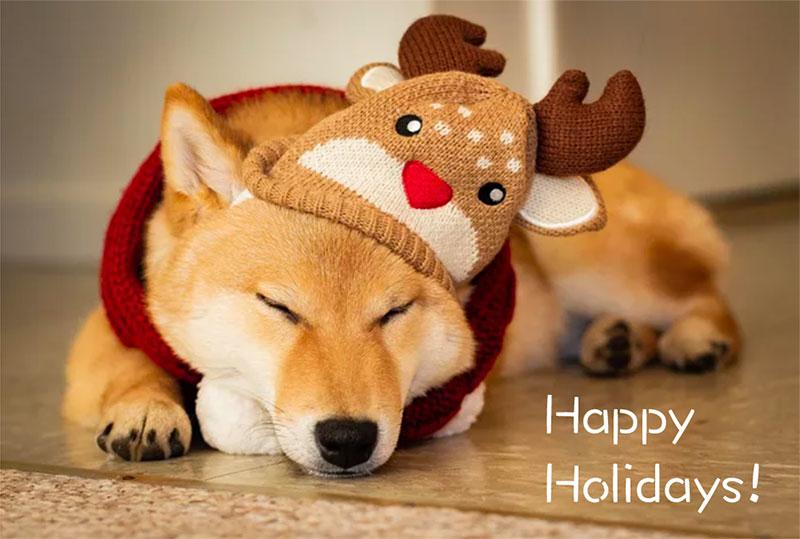 happydoge